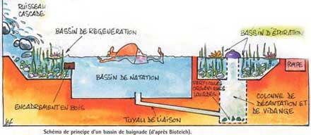 Piscines naturelles batiblog le blog du b timent et de - Autoconstruction piscine naturelle ...